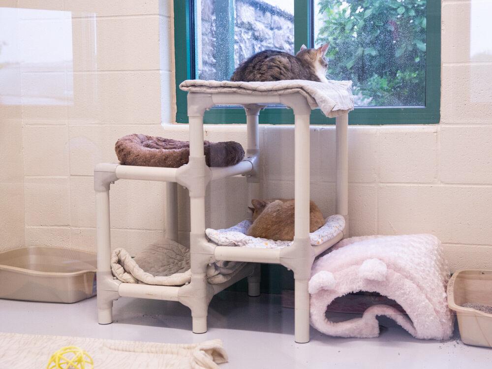 Carolynns corner cat condo